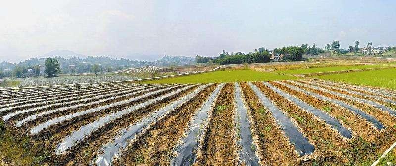 超敏蛋白,土壤污染,土壤污染治理